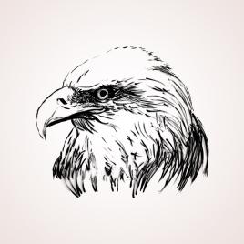eagle_illust
